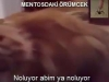 MENTOSDAKRMCEK